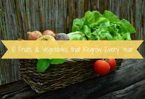 new year fruits and vegetables 10 fruits vegetables that regrow every year soul