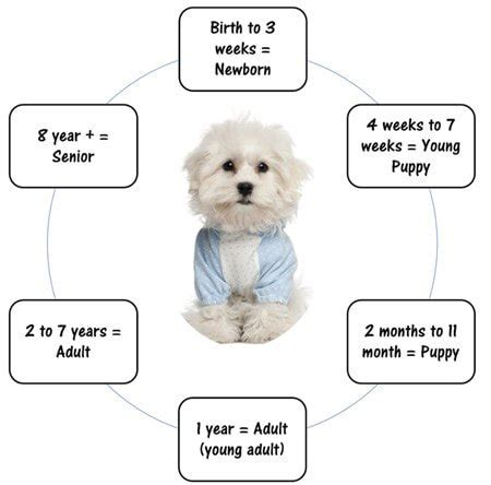 puppy milestones pictures of pregnancy stages breeds picture
