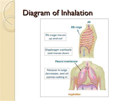 inhalation diagram image gallery inhale diagram
