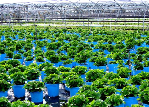 nursery layout for plants plant nursery wikipedia