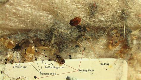 natural bed bug killer bed bug bite remedy bedbug traps