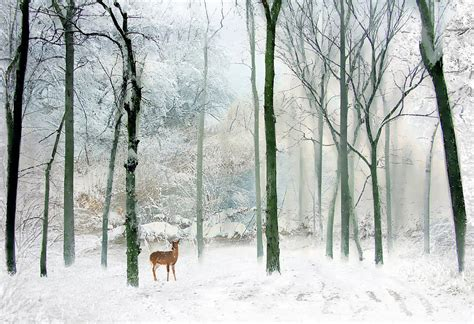 Home Blogs Decor by Winter Woodland Photograph By Jessica Jenney