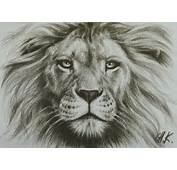 Lion Amazing Drawing  Images