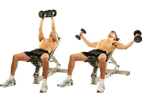 incline bench flyes the fitness oracle exercise directory