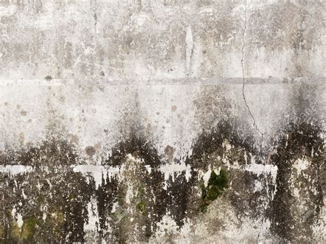 buying a house with mold in basement learn about mold freshstart restoration