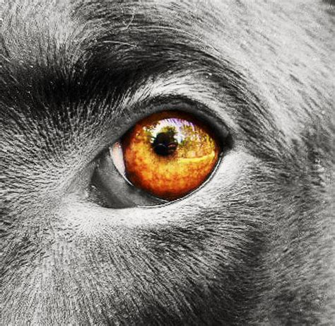 puppy eye color dogs eye view with a color splash by missanastasia1 on deviantart