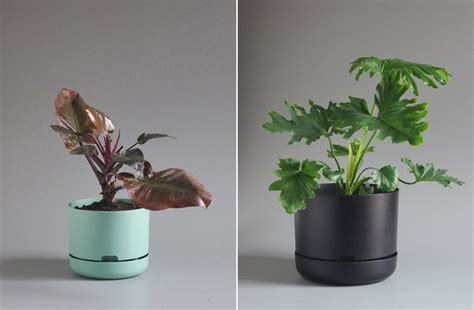 self watering plants mr kitly decor self watering plant pots cool hunting