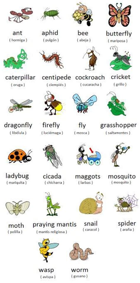 the vocabulary guide anglais 2091636894 forum learn english insects and bugs vocabulary words list fluent land ingles
