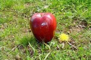 contenuto calorico alimenti bassa percentuale di grassi calorie alimenti a basso