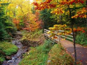 colors of fall nursapalooza cool and crispy fall leaves