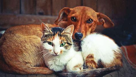stray dogs cats