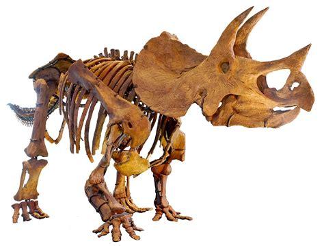 dinosaurus film wiki triceratops wikipedia