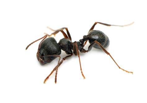 ants in the house ants archives perseverance pest control