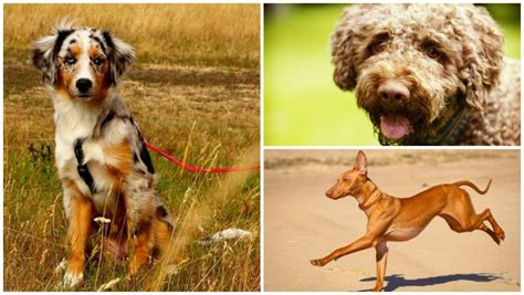 new breeds meet the newest breeds of westminster mnn nature network