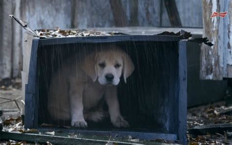 sad puppy commercial budweiser s lost bowl ad is quite an emotional ride cbssports