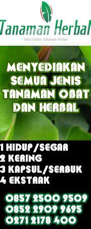 Herbislim Obat Herbal Pelangsing Alami Limited tanaman daun beluntas toko tanaman herbal