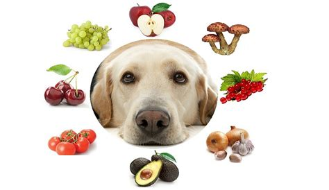 vegetables safe for dogs 8 fruits and vegetables that are not safe for dogs