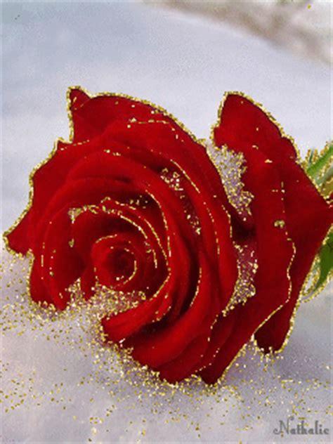 imagenes con movimiento de rosas rojas im 225 genes rom 225 nticas de rosas rojas de amor con movimiento