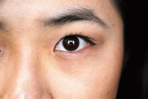 Eyeshadow Shu Uemura size shu uemura duo custom and pressed
