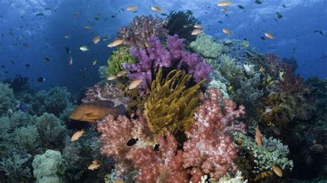Home Design Jobs Toronto discover an underwater rainbow in indonesia the globe