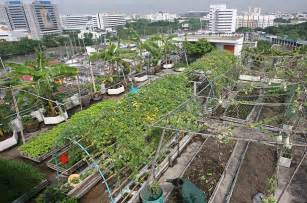 What Is Urban Gardening - younger generations embrace urban farming nourish the planet