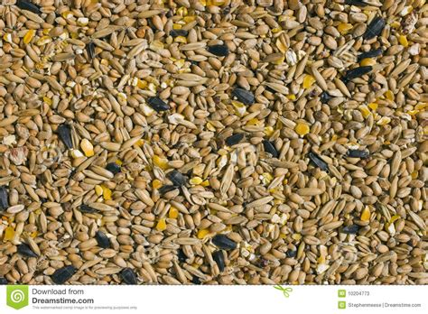 bird seed stock photos image 10204773