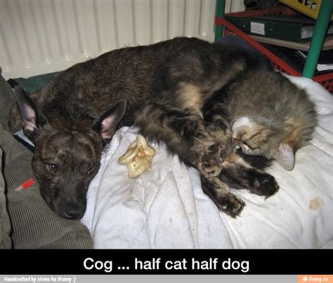 half cat half cog half cat half dat
