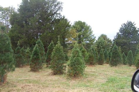 10 places to cut down your christmas tree this holiday