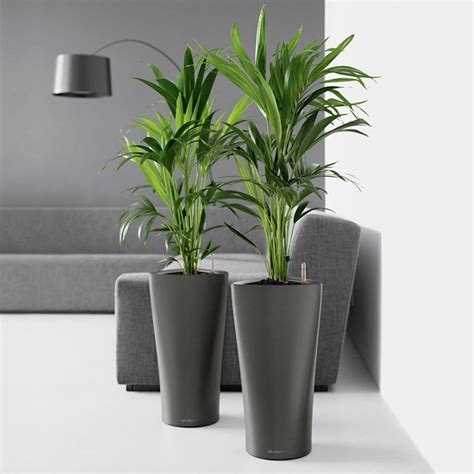 kentia palms in delta planter gaddys plant hire