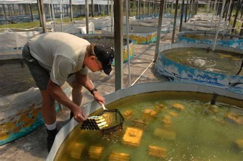 backyard crawfish farming crawfish farming in tanks video search engine at search com