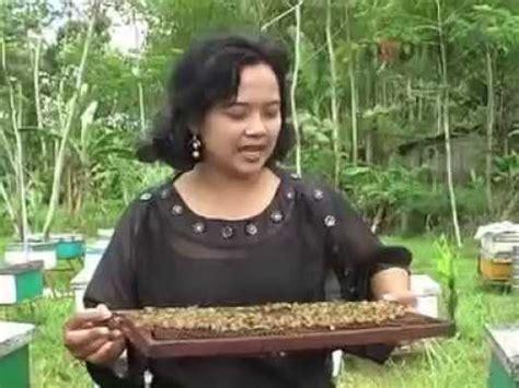 Bibit Ikan Koi Kalsel buku pintar budidaya dan bisnis ikan nila doovi
