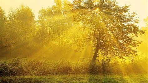color oro psicolog 237 a color oro