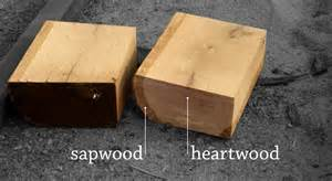 Sapwood and heartwood illustrated on pieces of wane from