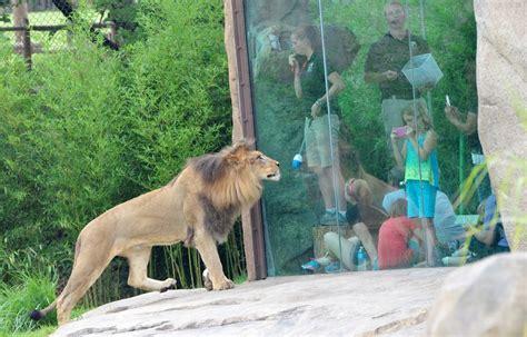 exhibits  cincinnati zoo botanical garden