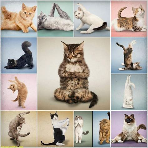 cat yoga wallpaper 17 best images about yoga kitties cats kitty cats and