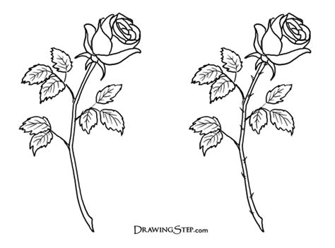 how to draw doodle roses the gallery for gt roses with thorns sketch