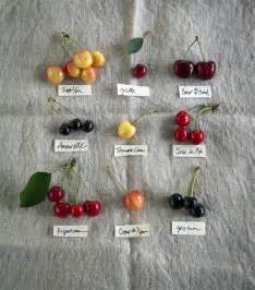 types of cherries timclinchphotography food pinterest