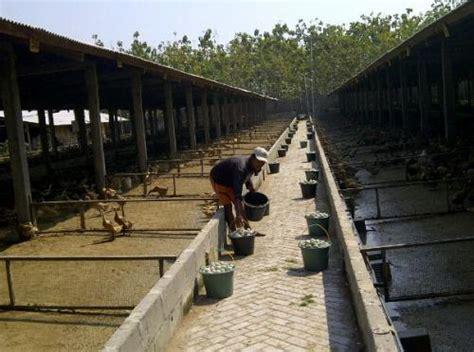 layout gudang pakan jual tanah di kesamben murah tanah disewakan kesamben