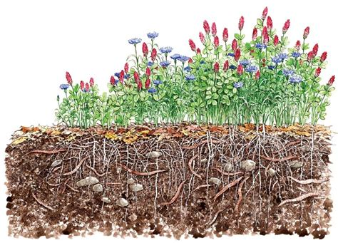 garden winter cover crop for a greener living sow cover crops for a healthier soil