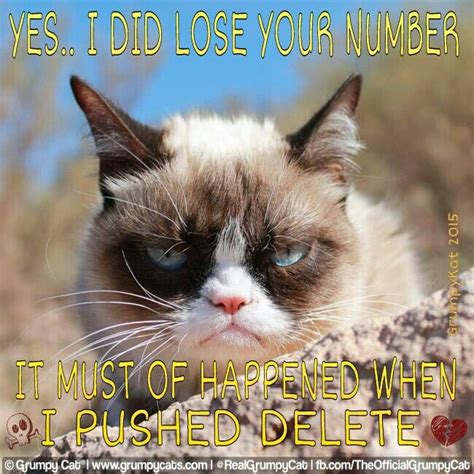 Original Grumpy Cat Meme - 1000 images about grumpy cat on pinterest grumpy cat