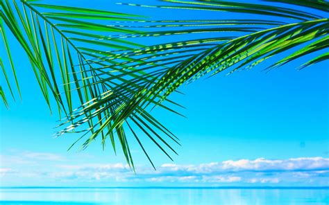 Bedroom Ideas palm tree leaf widescreen