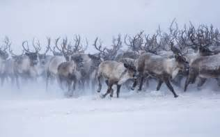 Country Decorations For Home Snowing Home Reindeer Spotted Headed Back After