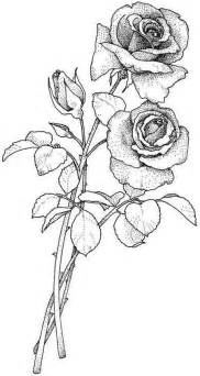 dessin rose bouquet