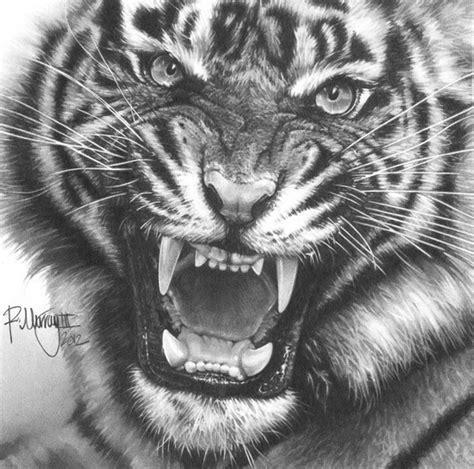 tiger pencil eyecatching art pinterest tigers