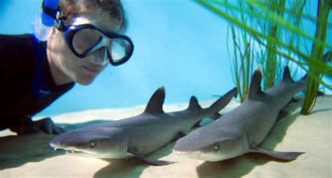 baby shark central park discovery cove archives citysurfing orlando