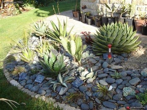 come fare un giardino di piante grasse giardini piante grasse piante grasse giardini piante