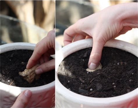 vegetables you can eat 10 vegetables herbs you can eat once regrow forever