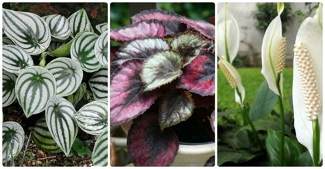 plants that do well in low light low light indoor plants house plants that thrive in