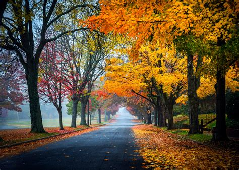 nature leaves mobile wallpapers mac  road autumn