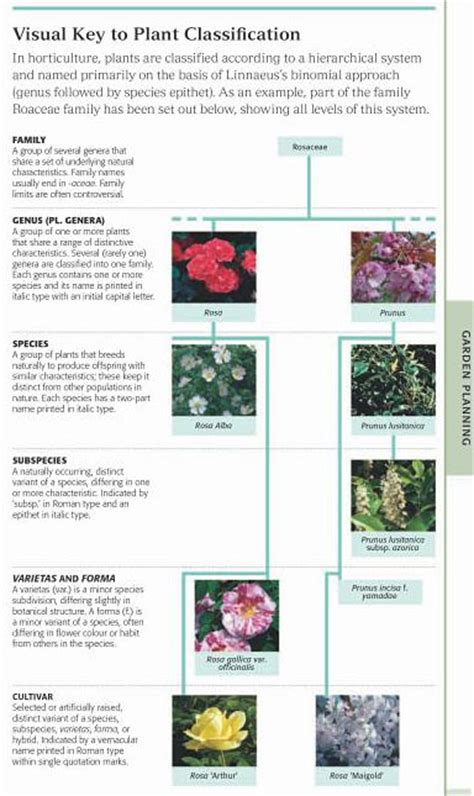 rhs encyclopedia of roses rhs encyclopedia of plants and flowers the idle gardener